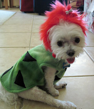 Pebbles Dog Costume