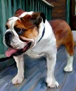 English Bulldog by Robert McClintock