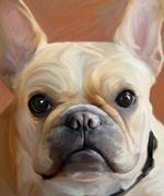 French Bulldog, Robert McClintock