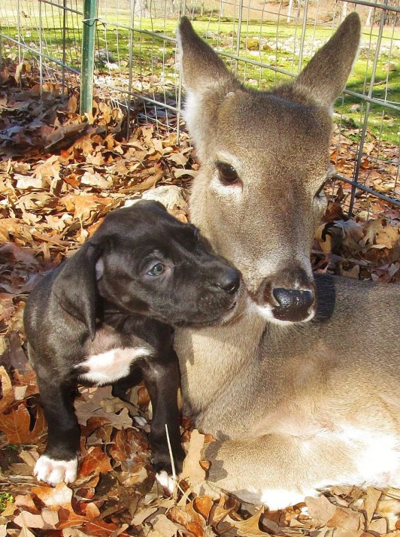 Of coures! A puppy and a deer!