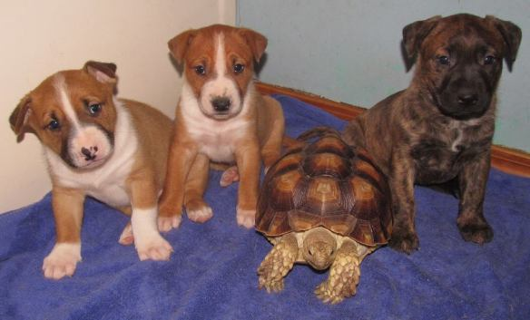 Pups with Crouton the tortoise