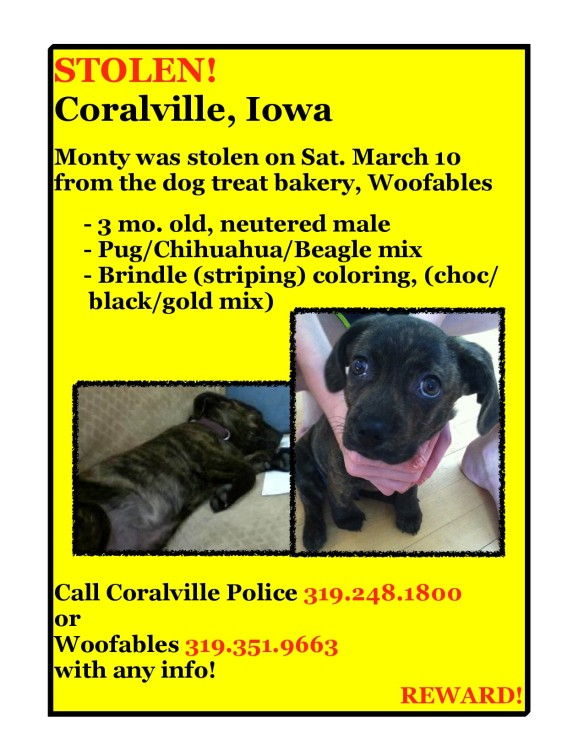Stolen puppy from Coralville Iowa