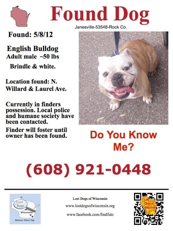 Found Male Englishbulldog In Janesville Wi Who S