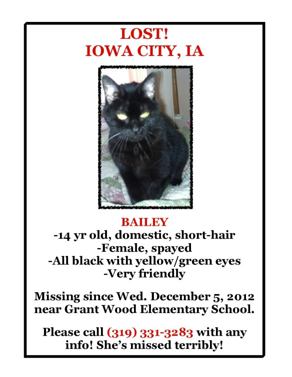 Bailey Cat Iowa City -1