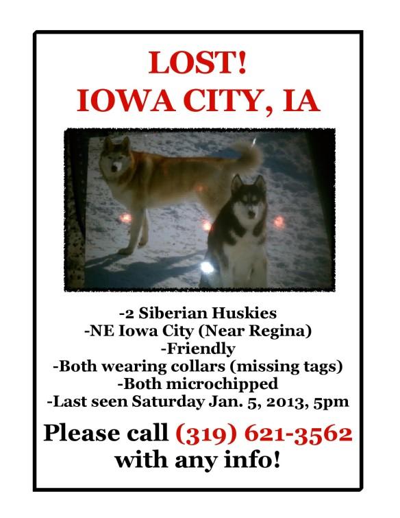 Huskies in Iowa City -1